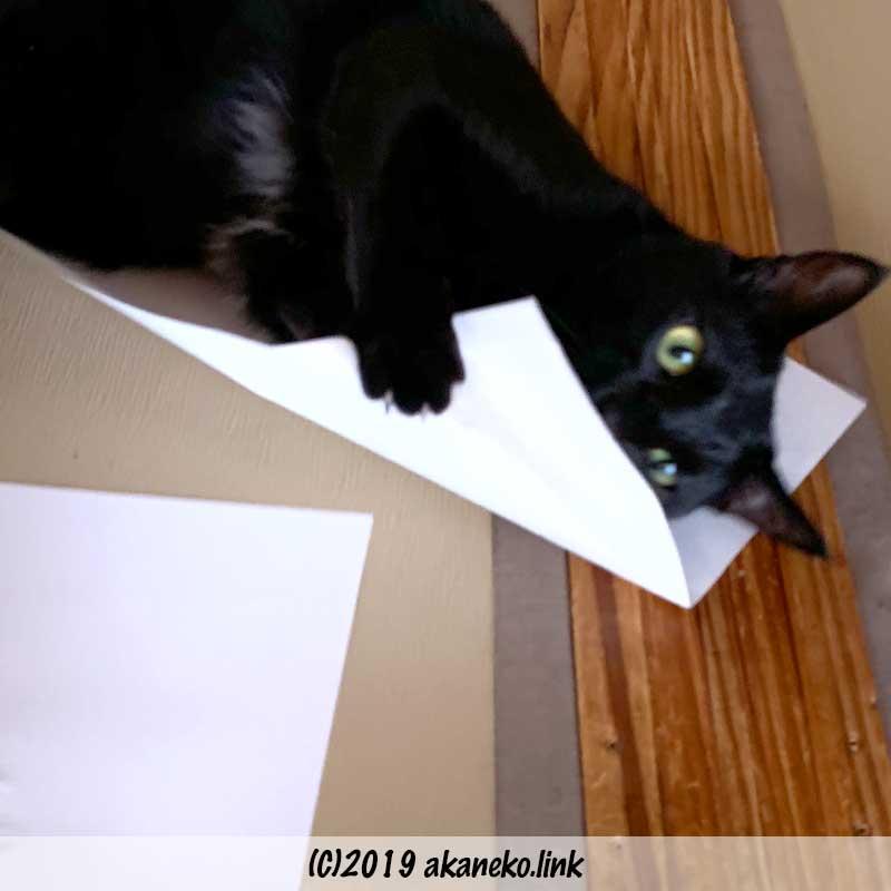 またたびの匂いのする紙にだきつく黒猫