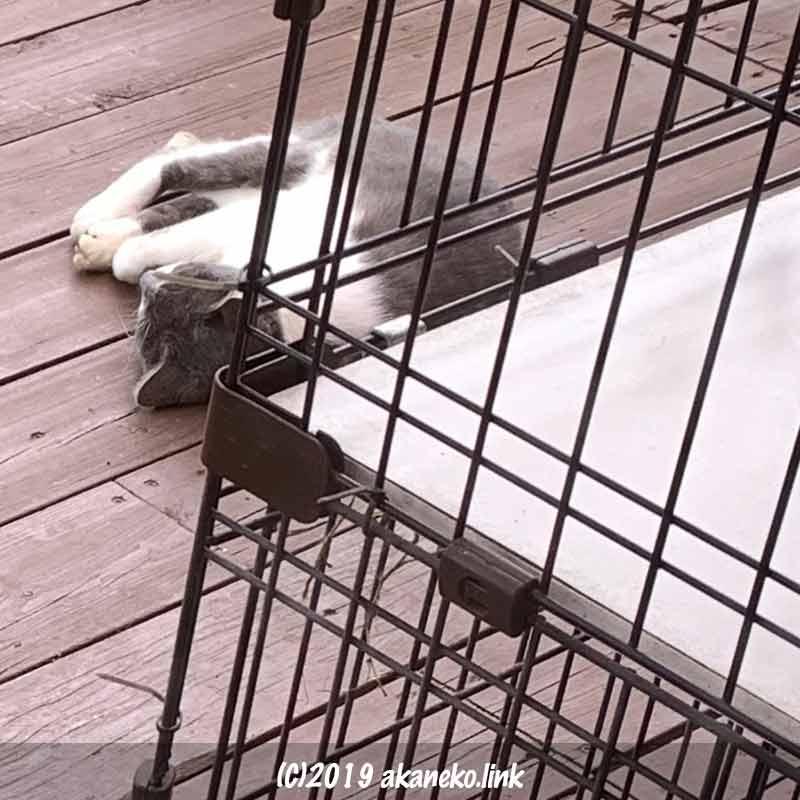 ウッドデッキで昼寝中の猫
