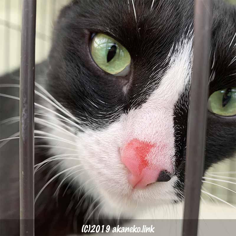 鼻を擦りむいて血が滲んでいる猫