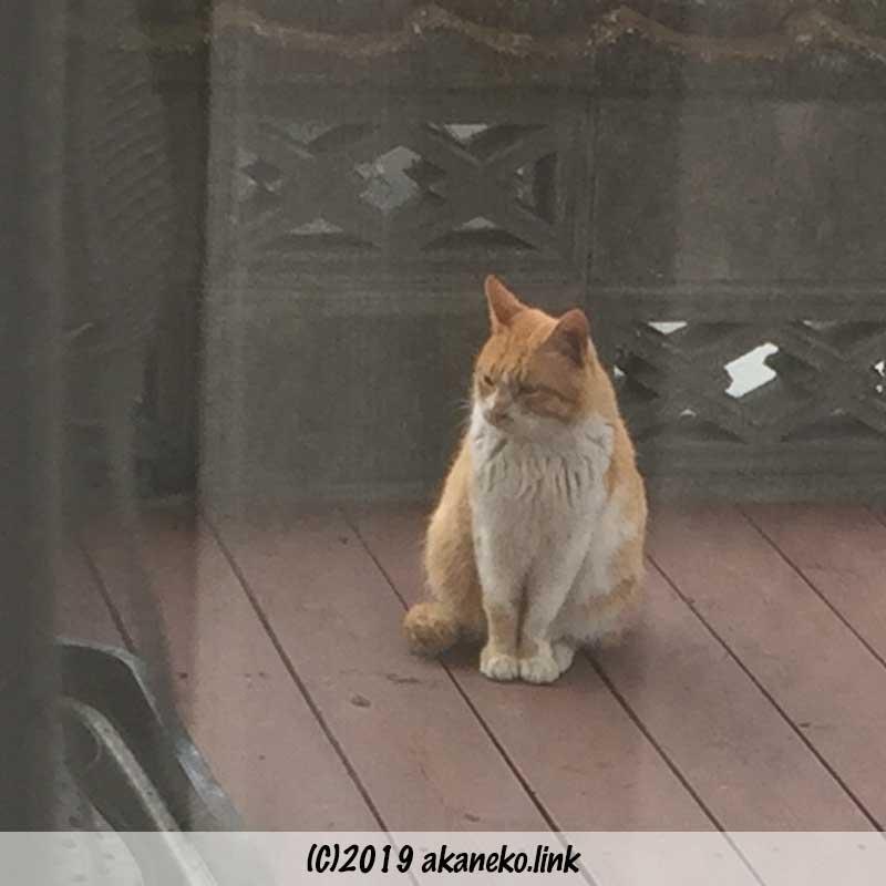 ウッドデッキに現れた野良猫