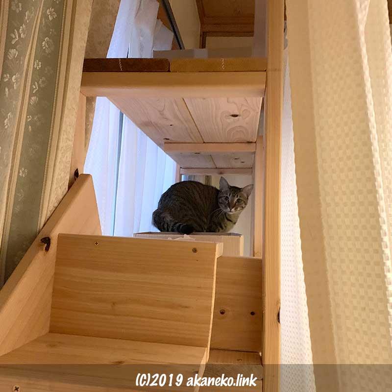 猫用棚の上からこちらを見る猫