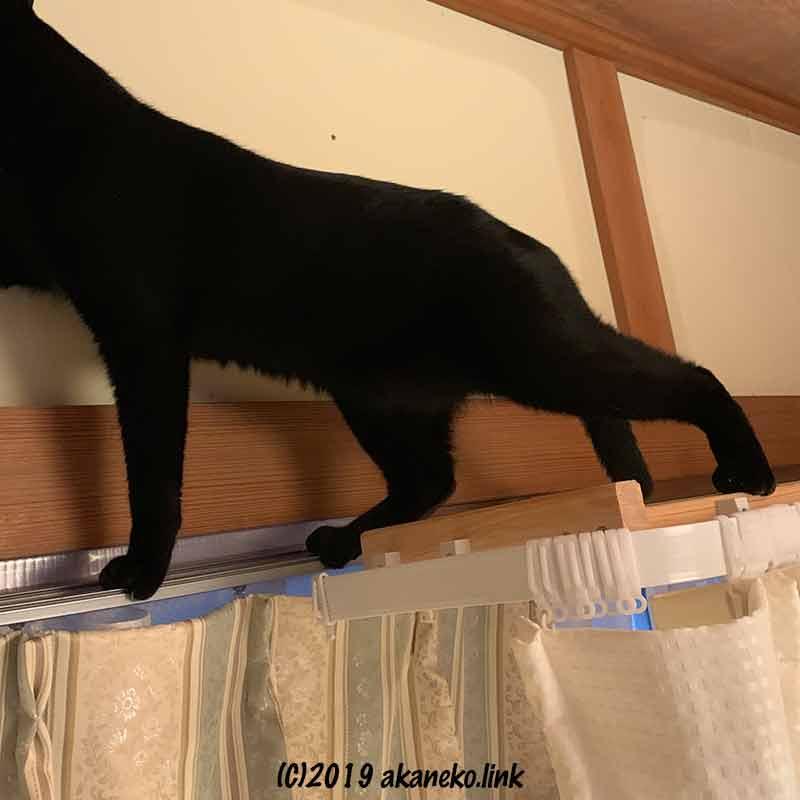 カーテンレールに足をかける黒猫の足