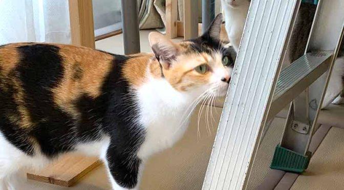 脚立の足を調査する2匹の猫