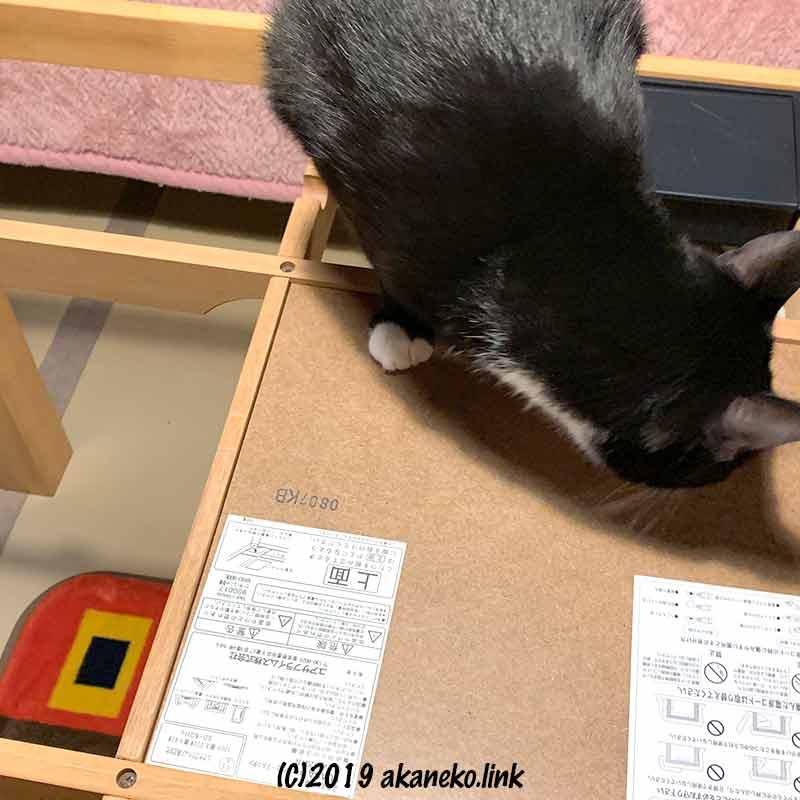 こたつの櫓を調査している猫