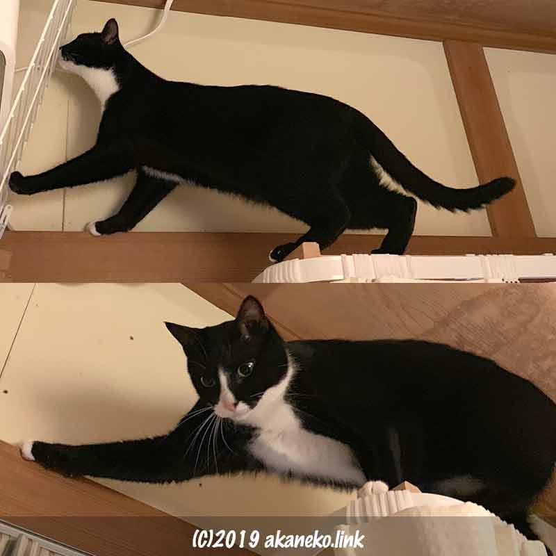 長押に登る猫