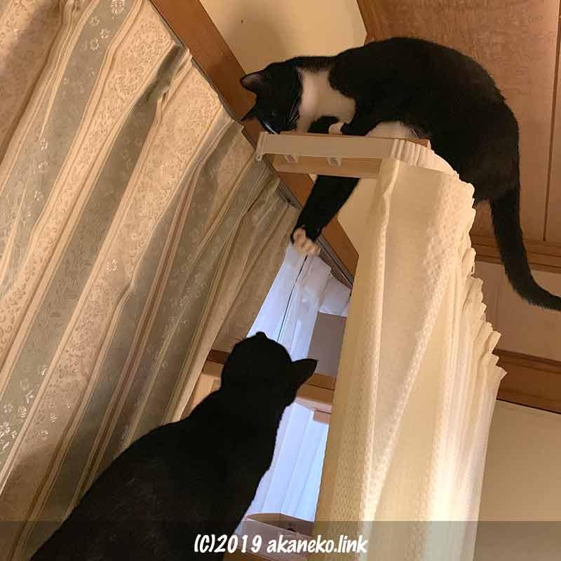 猫棚で戯れる2匹の猫