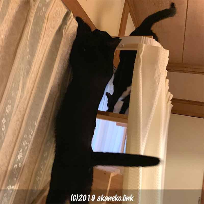 鴨居に手をかけようと背伸びする猫