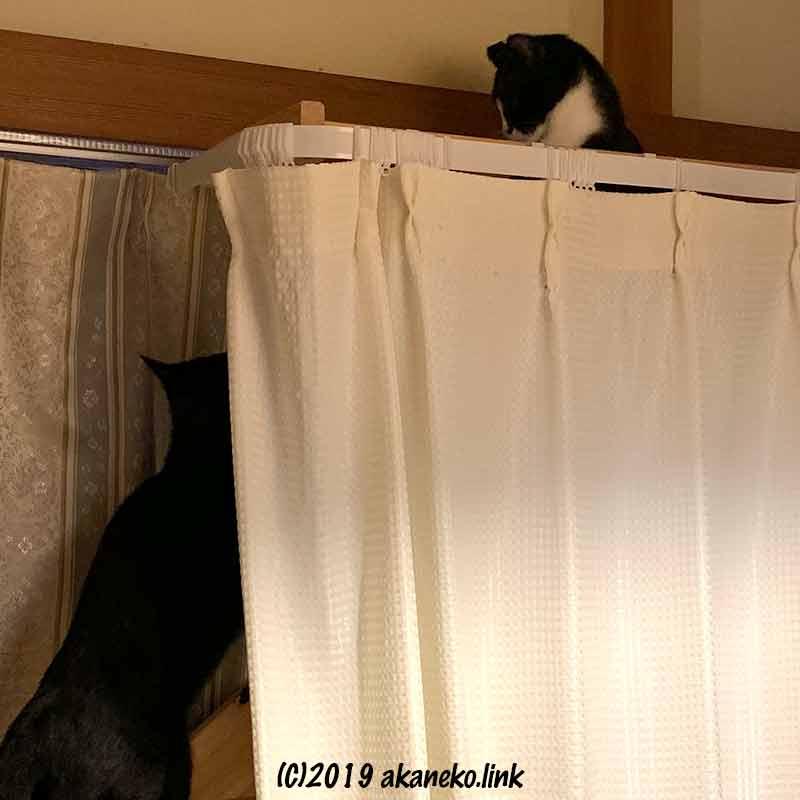 猫棚の2匹の猫