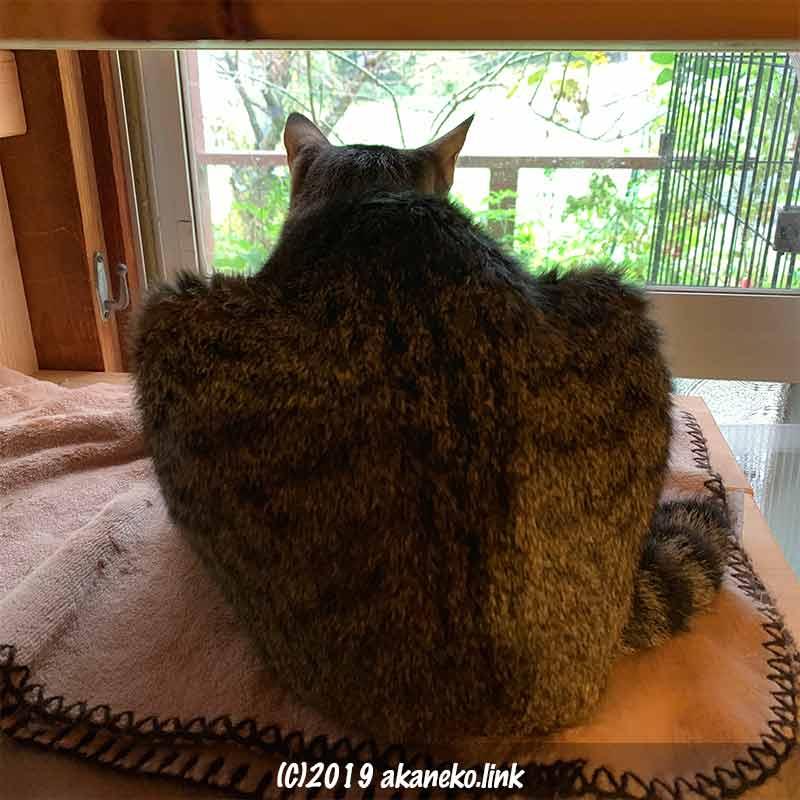 天井の低い猫棚から窓の外を覗く猫のお尻