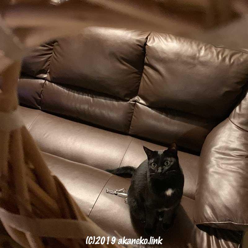 ソファの上から飾ったリースを狙う黒猫
