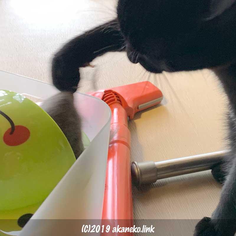 入れ物から手で猫毛を取り出す黒猫