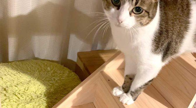 猫階段に立ち止まった猫