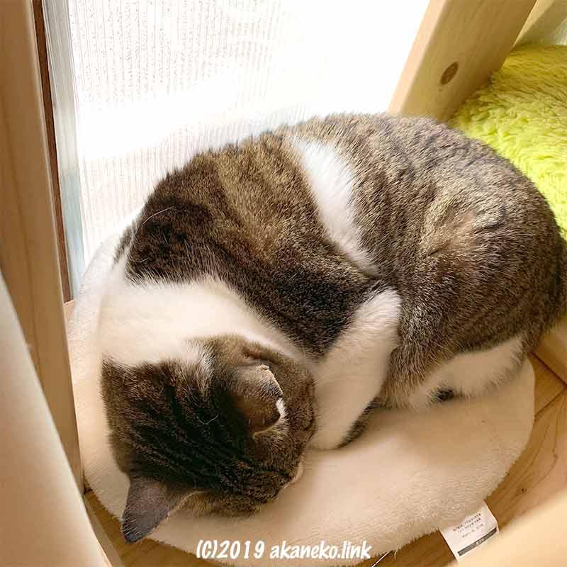 小さなクッションの上で丸まって寝る猫
