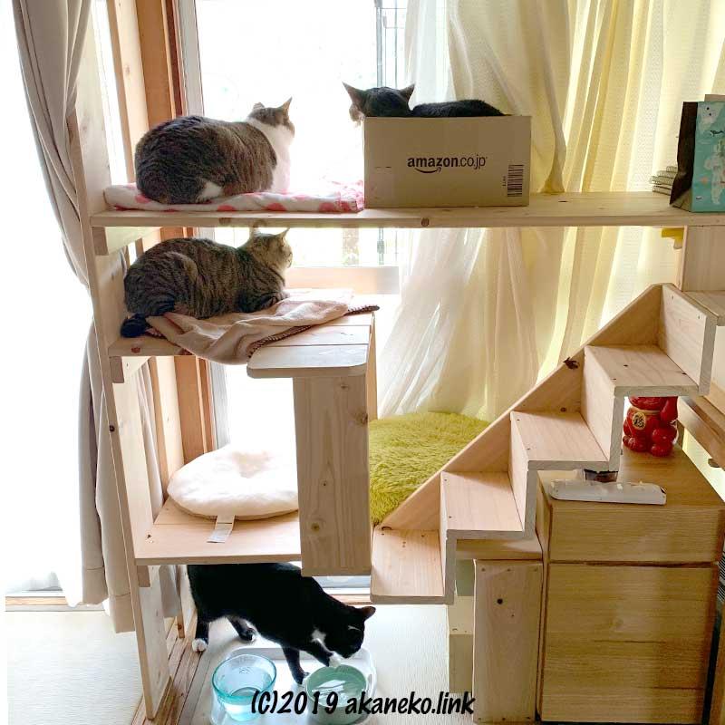 猫棚と4匹の猫