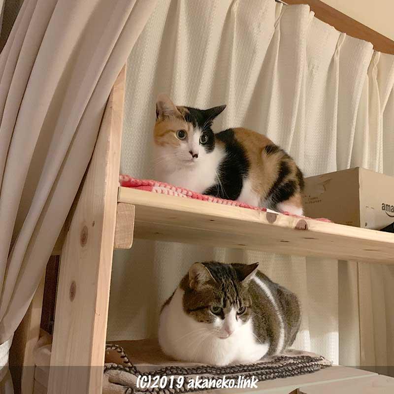 猫棚の上の2匹の猫