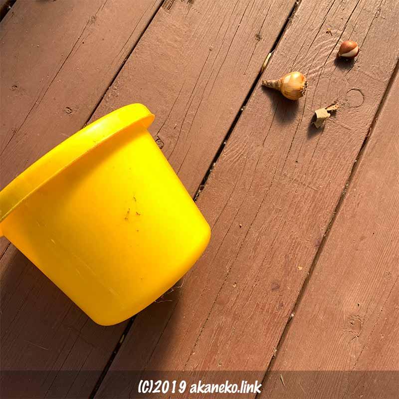 ウッドデッキに転がった黄色いバケツと球根
