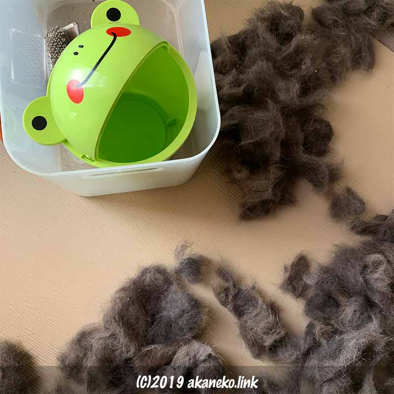 猫に掻き出されて畳に散らばった猫毛