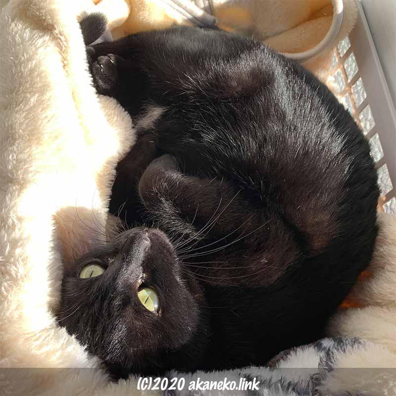 毛布の上で日向ぼっこ中の黒猫