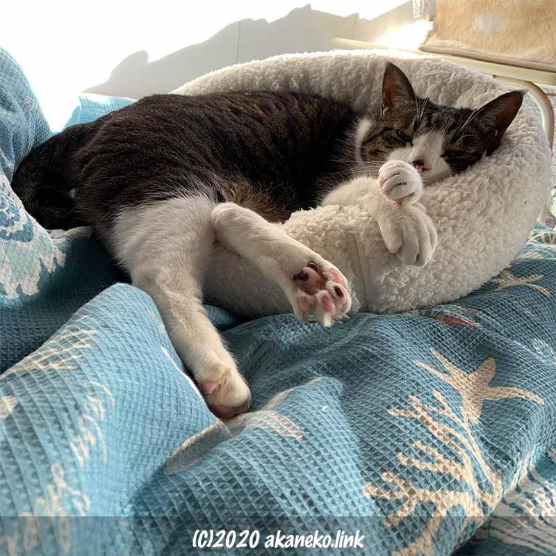 小さめ猫ベッドで手足を持て余している猫