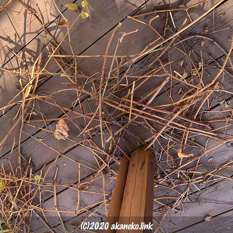 剪定して落としたぶどうの枝