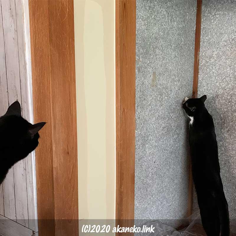 仏壇スペースで立ち上がって繊維壁を観察するネコ