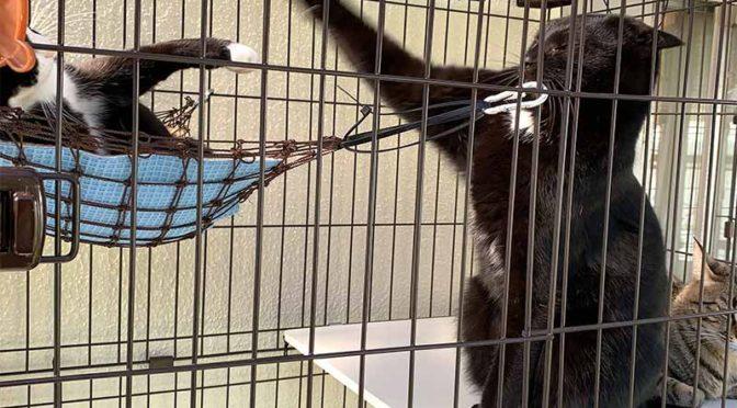 猫の外ケージ拡張:アイリスオーヤマのコンビネーションサークルでツインタワー