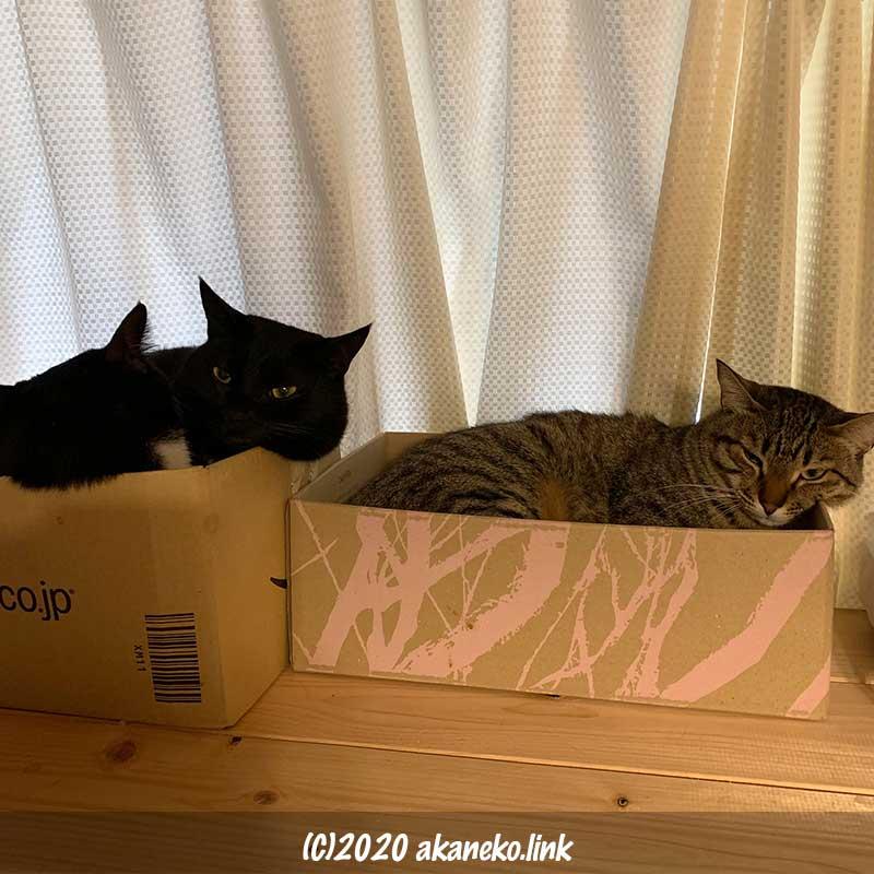 猫棚のダンボールに入っている猫たち