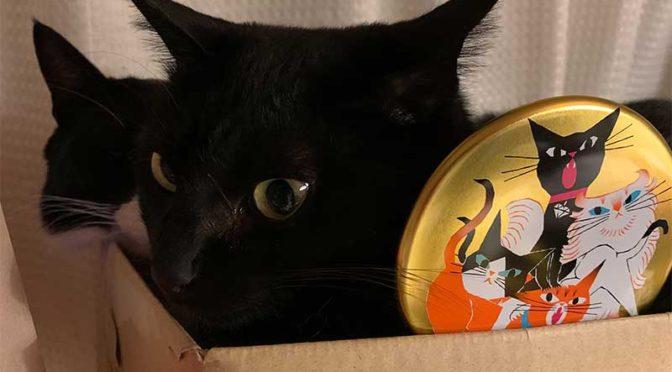 ゴンチャロフのアンジェジェ缶で今年も猫に押し付けバレンタインデー