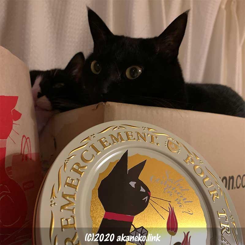 ダンボールに入った2匹の猫とアンジェジェ