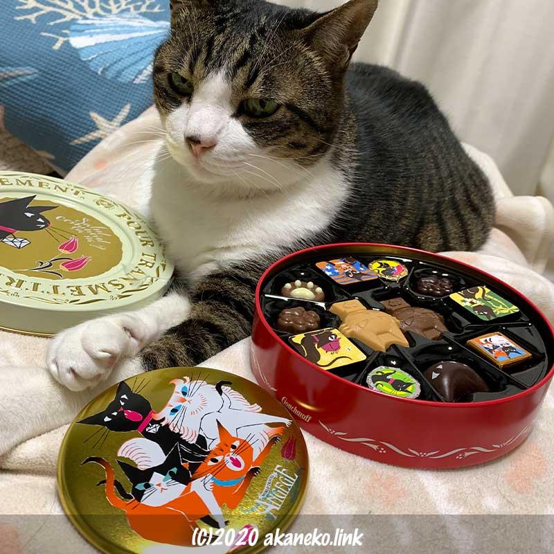 ゴンチャロフのアンジュジュチョコ缶と寝そべる猫
