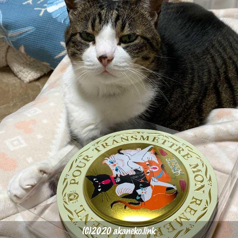 ゴンチャロフのアンジュジュチョコ缶を前にする猫