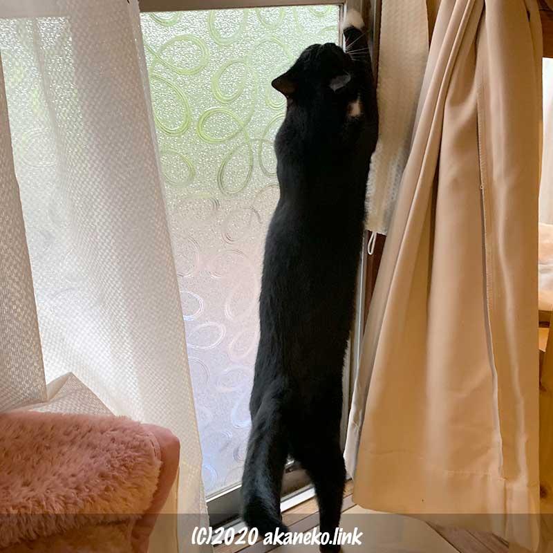サッシを開けようとチャレンジしている猫