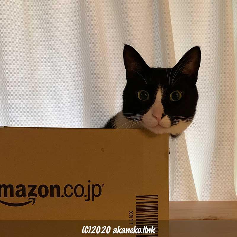 アマゾンのダンボールから顔だけ出した猫