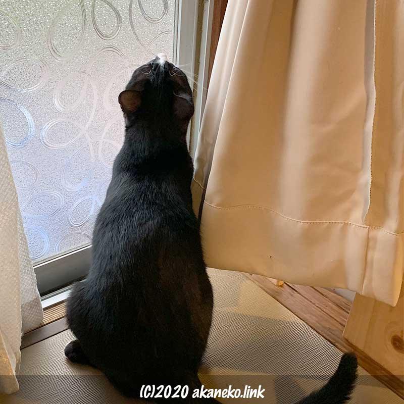 サッシの前に座る猫の後ろ姿