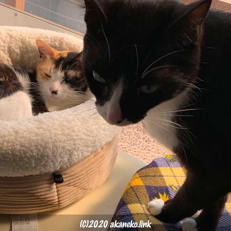 窓際の二匹の猫