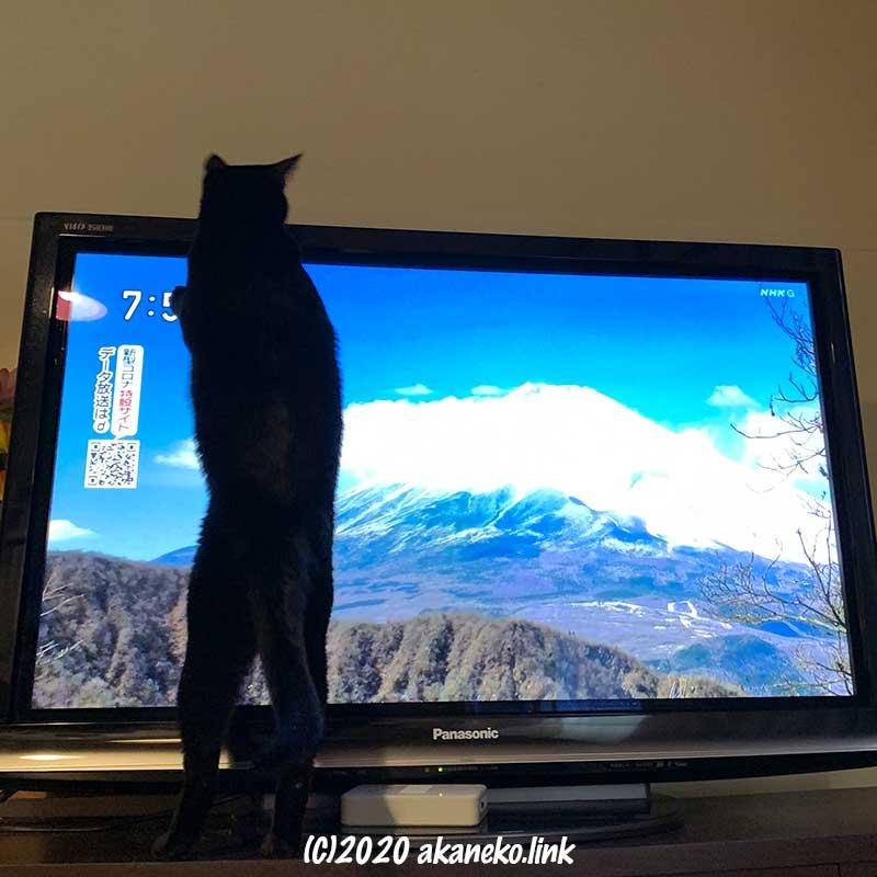 テレビの前で立ち上がる黒猫