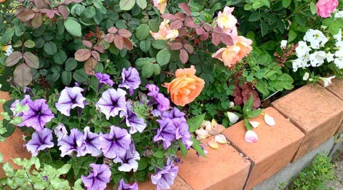 手抜きレイズドベットのその後(カチコチ土壌に置き花壇を作る2)