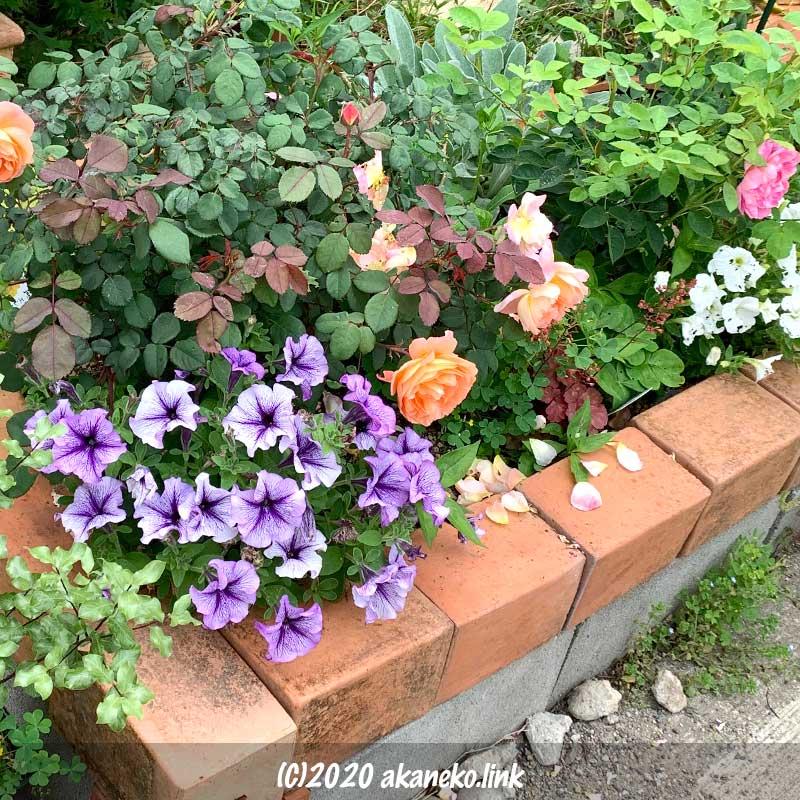 手作り花壇は植物でギッチリ埋まった