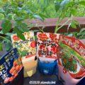 ミニトマト4種を水耕栽培