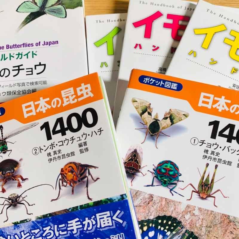 虫の名前を調べるための本を大人買い(イモムシハンドブック、日本の昆虫、日本の蝶)