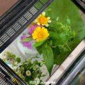 花いっぱいの飼育ケース