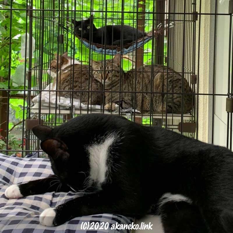 外ケージでくつろぐ猫の家族