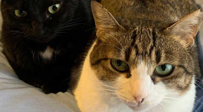 朝のくっつき猫:キコ&クロエ