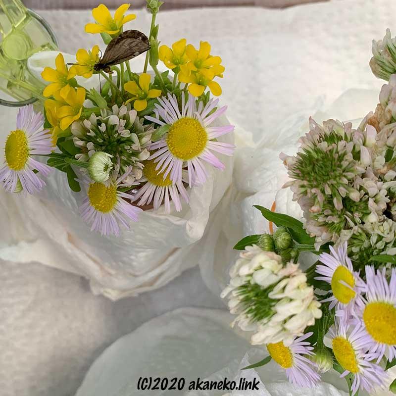 ヤマトシジミの飼育ケースの中の小花のブーケ