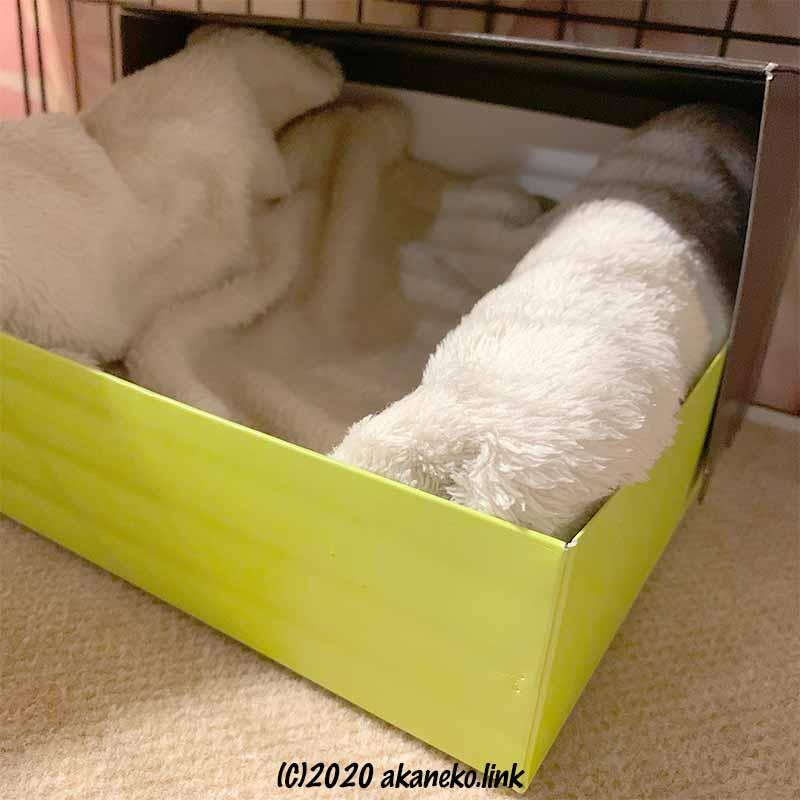 お菓子の空き箱を再利用した子猫ベッド