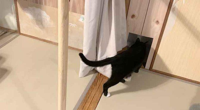 完成した手すりと猫穴を抜ける猫