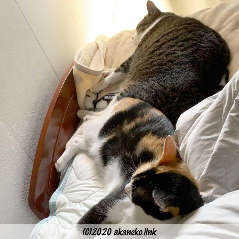 ベッドで惰眠をむさぼる2匹の猫