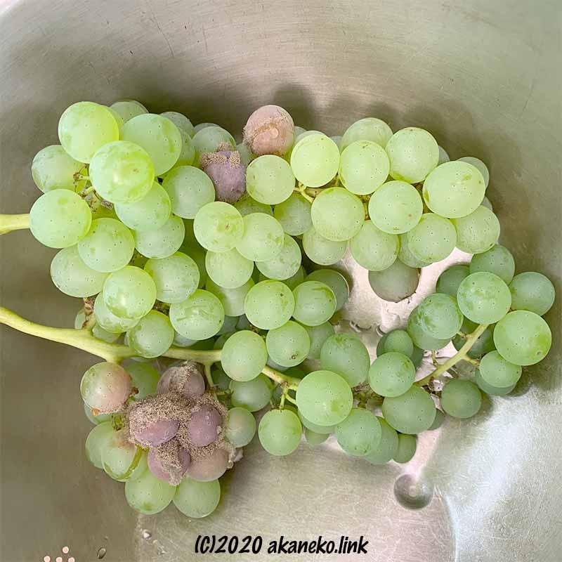 一部にカビが生えた葡萄