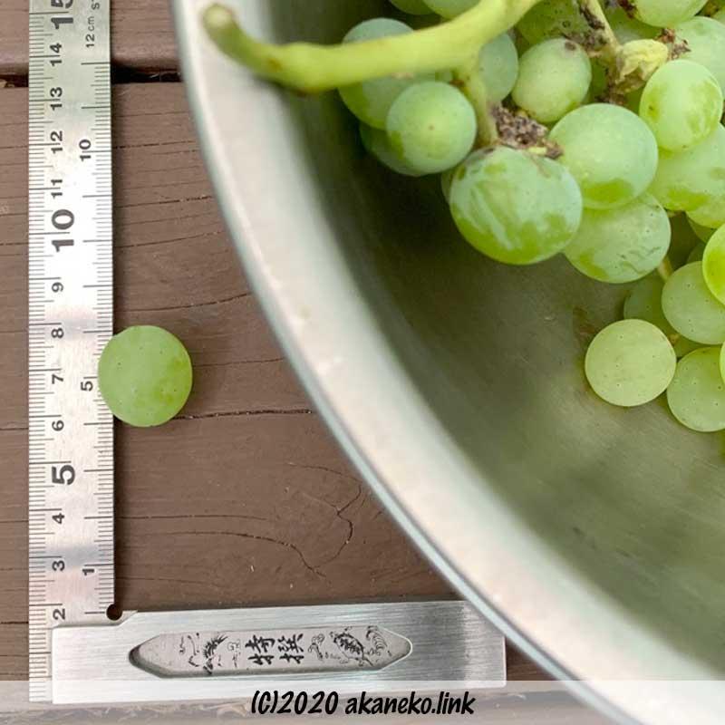 無肥料ヒムロッド・シードレス1粒の直径は約2センチ