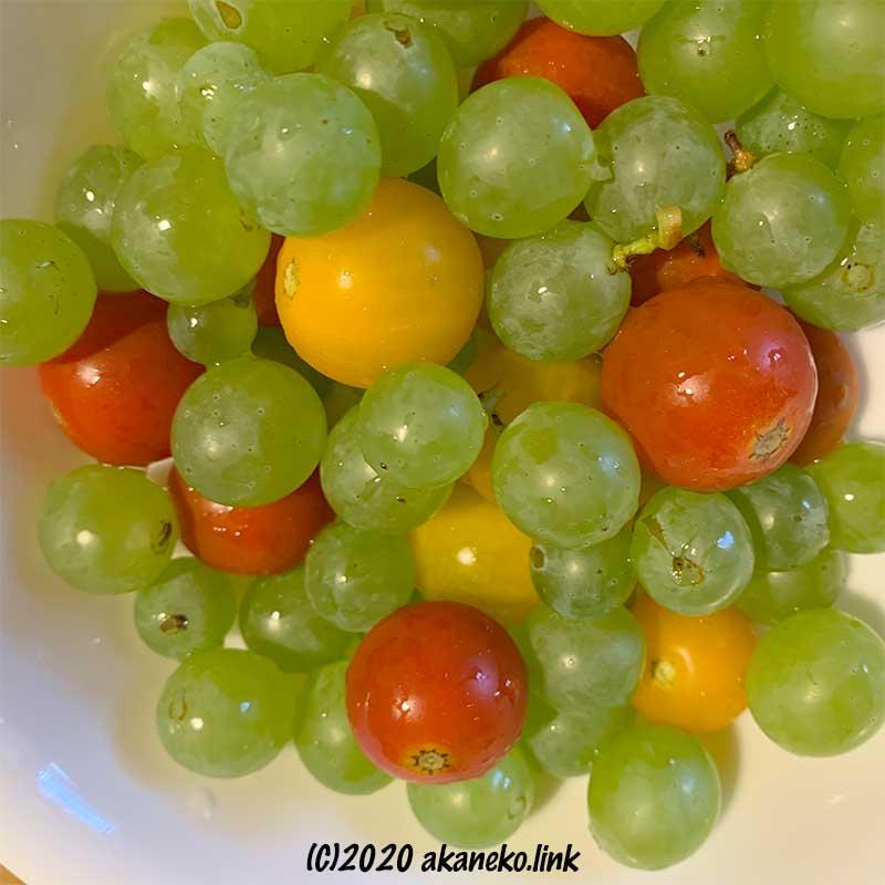 ミニトマトと葡萄(ヒムロッド・シードレス)の粒